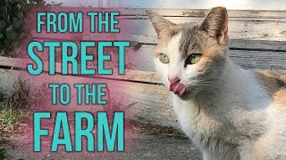 Fia the Feral Gets a Barn Home