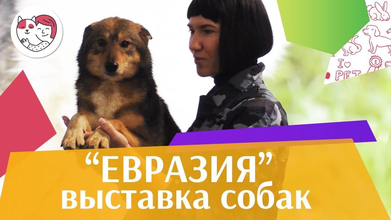 Интернациональная выставка собак «Евразия» на ilikepet