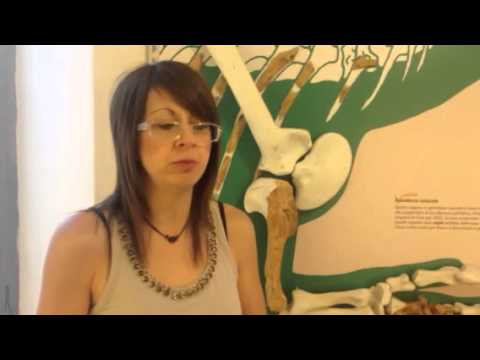 Il Fossile Saltriosauro al museo di Besano