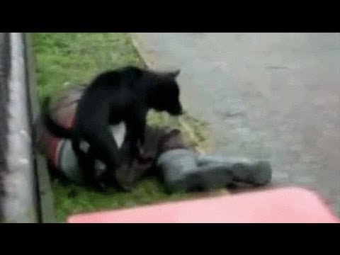 Perro follando a otro perro xD - YouTube