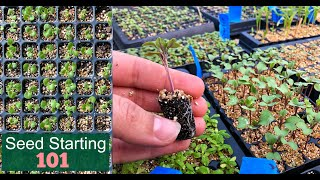 Seed Starting 101 | How We Start Seeds | Germinating Seeds Fast | Detailed Lesson // Garden Farm