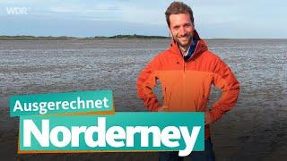 Ausgerechnet Norderney   WDR Reisen
