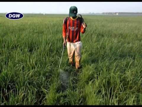 Video Cara Mengendalikan Gulma