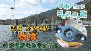 水中ドローンびわ湖の中の旅:松の浦の桟橋 編