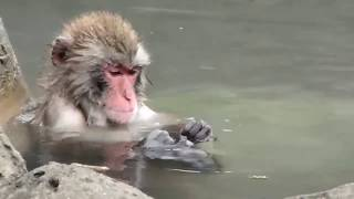 world animal collection vol.4 funny&cute monkeys