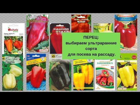 ПЕРЕЦ: выбираем ультраранние сорта для посева на рассаду.