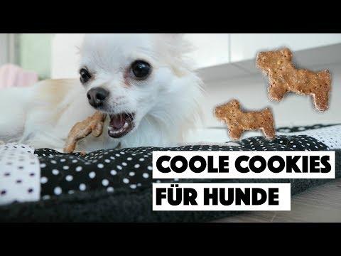 DEIN HUND WIRD ES LIEBEN! 🐶❤️ - COOLE COOKIES FÜR HUNDE BACKEN | DIY