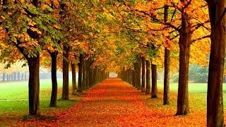 Folhas De Outono ( Richard Clayderman )