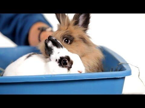 , title : 'Should I Get a Friend for My Rabbit?   Pet Rabbits