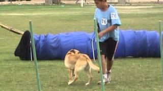 טיפול בעזרת כלבים - טיפול בעזרת בעלי חיים - תחרות אג'יליטי 3
