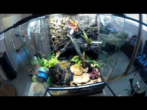 Dart Frog Vivarium Finally Built