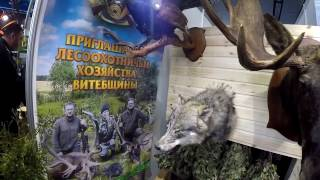 Выставка Минск 2017 ч.4.Лови с нами. Форма.Поводки.