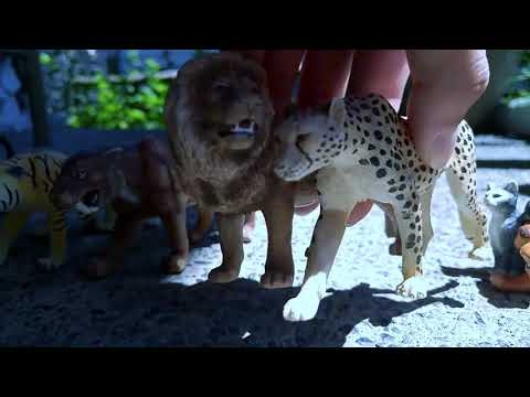 Paws By Claws Ep.18 Lion Tiger Volf Schleich  Kristina Kashytska Dog 2018 Kids 2018 Family Roleplay