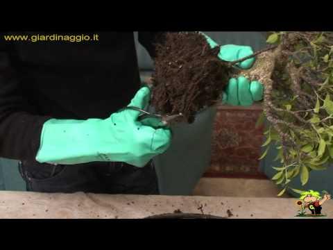 Che trattare un fungo su pelle di piedi
