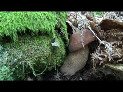 Mezzi contro un fungo sulle dita di mani