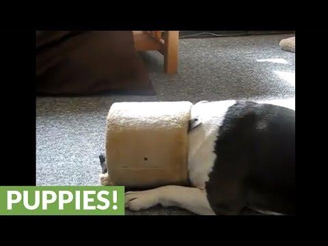 Youtube Funniest Dog Videos