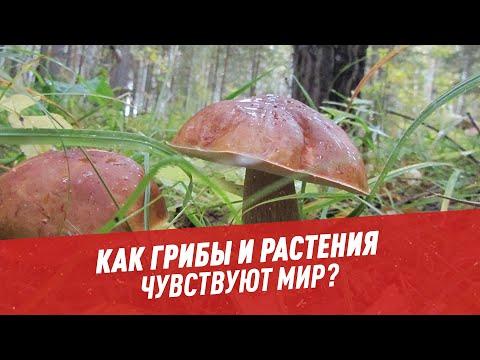 Как растения и грибы чувствуют мир и приспосабливаются к изменениям вокруг - Хочу всё знать