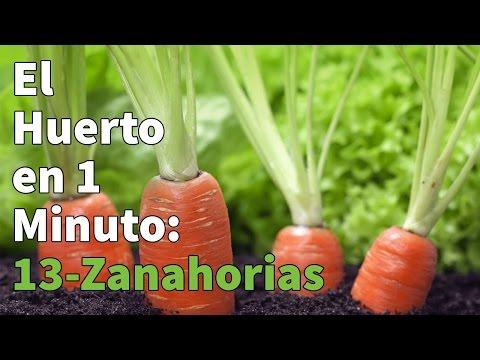 Semillas de  Zanahoria Nantesa 5 Cilindro, 25gr