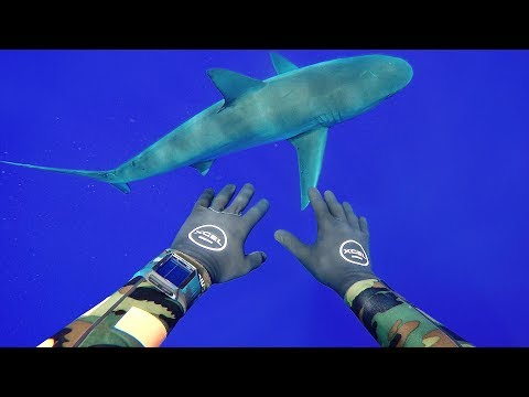 Freediving with Sharks in Middle of Ocean (400FT Deep) | DALLMYD