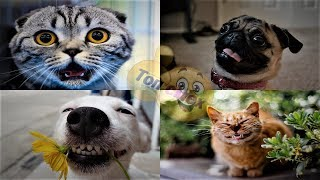 Приколы с кошками I собаки - смешное видео  ДО СЛЕЗ