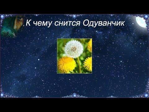 К чему снится Одуванчик (Сонник)