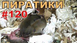 """#120. Реалити Шоу """"ALCARATZ"""". ДОМ 2 - Крысы. Пиратики"""