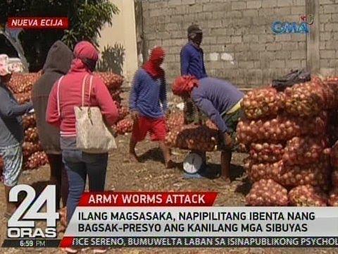 Kung paano mapupuksa ang mga taong nabubuhay sa kalinga herbs