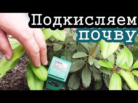 ПОДКИСЛЯЕМ почву ЛИМОННОЙ КИСЛОТОЙ / На примере рододендрона