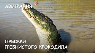 Мир Приключений - Прыжки гребнистого крокодила. Нац. Парк Какаду. Австралия. Crocodiles Jumping.