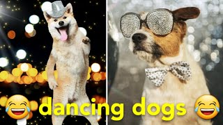 TRY NOT TO LAUGH! Dogs dance unbelievably well Best of 2020