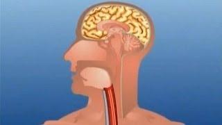 Learn Human Body Part - Internal - Kids Educational Video