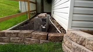 Keep animals OUT from under your shed, porch, and deck