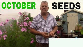 What seeds to SOW in October In the Allotment  Gardening UK