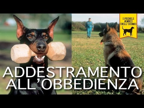 ADDESTRAMENTO ALL'OBBEDIENZA trailer documentario (cani e cinofilia)
