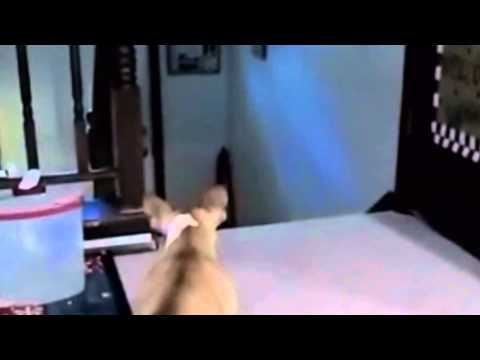 Dog Scared Of Cat, Then Screams Like A Girl