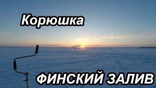 Клев корюшки на финском заливе