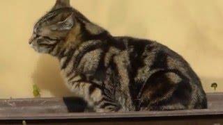 Katze Mimi – Liegeplatz gesucht