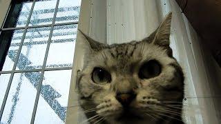 台風接近!我が家崩壊の危機!…緊張状態から猫パニック!-TyphoonHasCome,SoCatAndMomPanic