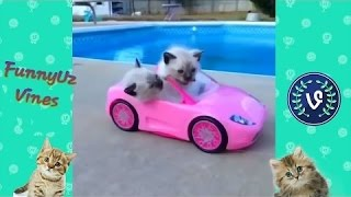 Best cute kittens,Vine Compilation // The Best Funny Vines 2016