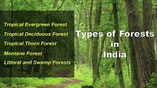 Types of Forests in India - Evergreen, Deciduous, Thorny, Montane, Littoral Swamp