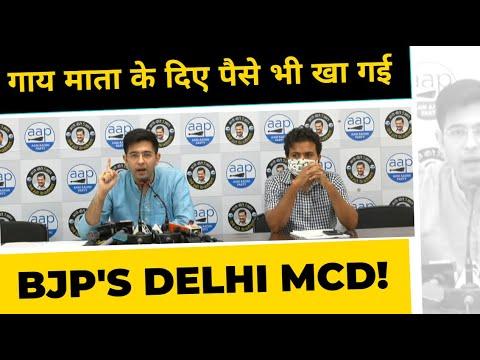 गाय माता के दिए पैसे भी खा गई दिल्ली MCD | DELHI MCD EXPOSED