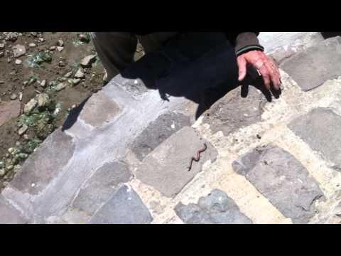 Giardia paggamot pamumuhay sa mga bata