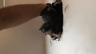 Firefighters Rescue Tiny Kitten From Inside Wall