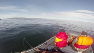 Ловля трески на баренцевом море лучшее время