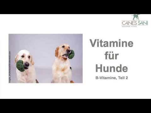 Vitamine für Hunde  - Im 2. Teil dieser Reihe geht es um weitere B-Vitamine, wie z.B. Folsäure