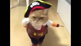 Кот в костюме пирата