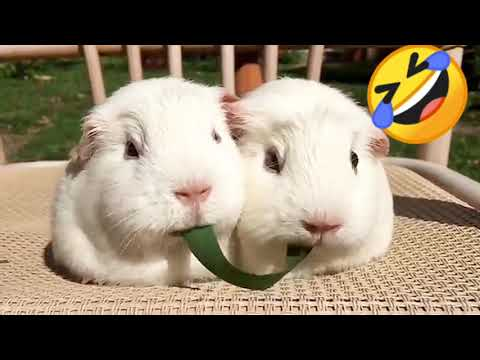 , title : 'rabbits eating funny status