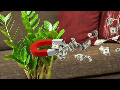 10 комнатных растений, приносящих финансовую прибыль в дом!