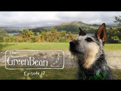 The Green Bean Podcast Episode 17