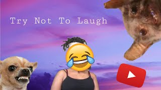 Try Not To Laugh*Cute Animals Edition* Reaction